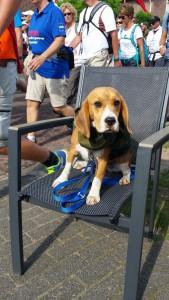Olina 4daagse beagle