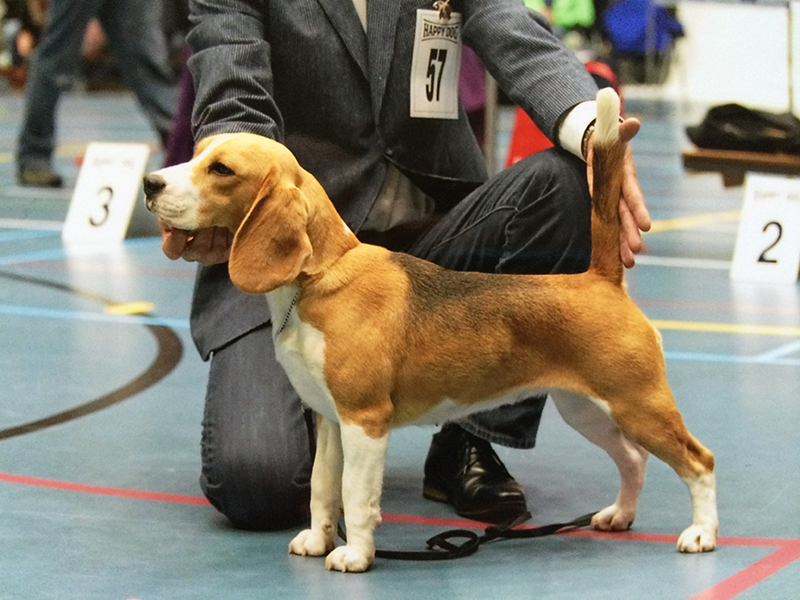 van Numaga Beagles Mendy